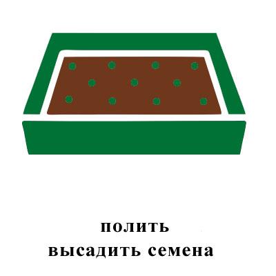полить, высадить семена.jpg