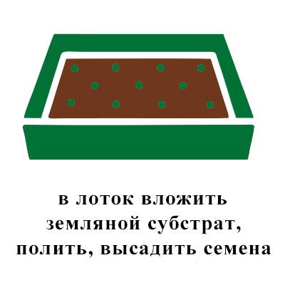 земля, полить, высадить семена (2).jpg