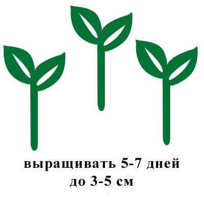 выращивать 5-7 дней до 3-5 см.jpg