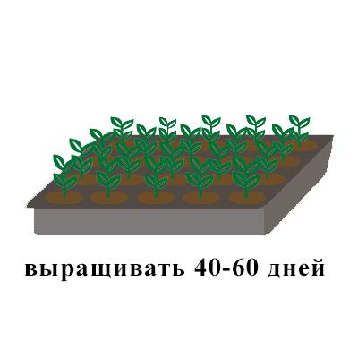 выращивать 40-60.jpg