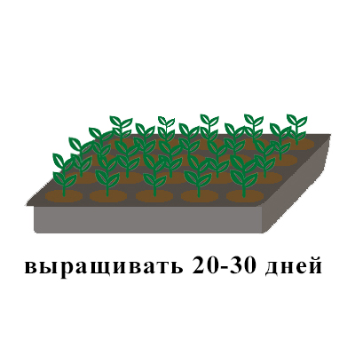 выращивть 20-30 лоток земля.jpg
